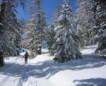 Winterimpessionen 2015-16